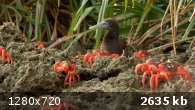 BBC. � ���� �������� / Wonders of the Monsoon (2014) BDRip 720p �� ExKinoRay | VO